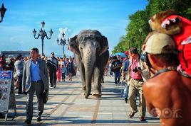 Слоны в городе