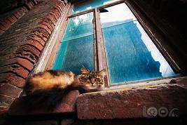 кот, который сидит на окне